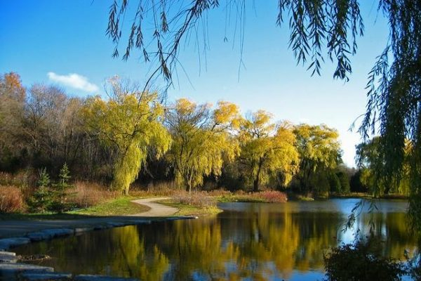 Willow_leaves_reflecting_October_beauty